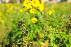 瓢虫坐领域杂草,选择聚焦 免版税库存图片