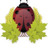 瓢虫月桂树花圈 免版税库存图片