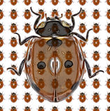 瓢虫照片样式 图库摄影