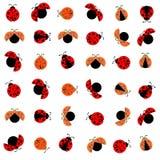瓢虫的样式 免版税库存图片