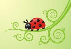 瓢虫红色 图库摄影