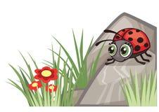 瓢虫自然角落设计装饰 免版税图库摄影