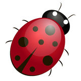 瓢虫 向量例证