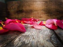 瓣上升了 秋叶 苹果秋天对光检查袋装花瓶的构成干燥叶子 免版税库存图片