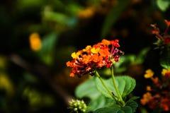 瓣在庭院里 库存图片