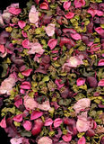 瓣玫瑰色纹理 免版税库存图片