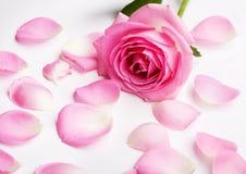 瓣粉红色上升了 免版税库存照片