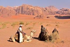 瓦地伦,约旦- 2010年11月12日:约旦指南骆驼为远足做准备在瓦地伦沙漠 图库摄影