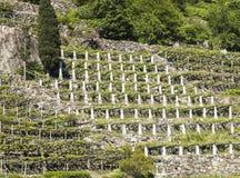瓦尔d `的奥斯塔,意大利葡萄园 库存照片