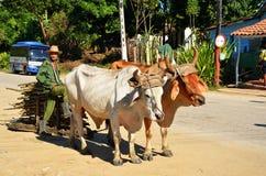 瓦尔de los ingenios和它的人民;古巴 库存照片