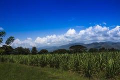瓦尔del cauca en哥伦比亚风景  免版税库存照片