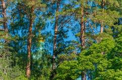 瓦拉姆群岛美丽的杉木,躲藏起来从寺庙爱管闲事者 根据传奇,瓦拉姆群岛是无法获得的对不轻信者 免版税图库摄影
