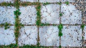 瓦片在有小石头和草的城市发芽在瓦片之间 夏天在操场的样式路 库存照片
