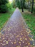 瓦片路在与五颜六色的叶子的秋天 纹理,样式,背景 槭树叶子在边路的秋天 免版税库存图片