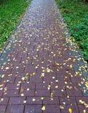 瓦片路在与五颜六色的叶子的秋天 纹理,样式,背景 槭树叶子在边路的秋天 图库摄影