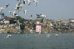 瓦腊纳西市在印度 库存图片