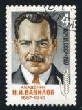 瓦维洛夫 图库摄影