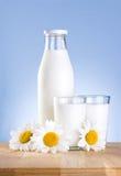 瓶、二杯牛奶和三春黄菊 库存图片
