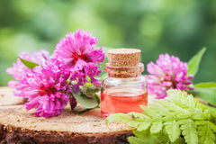 瓶不老长寿药或精油和束三叶草 免版税库存图片