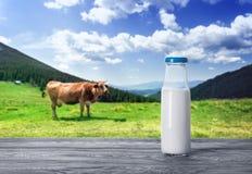 瓶与一头母牛的牛奶在山牧场地 库存图片