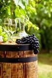 瓶与葡萄酒杯和葡萄的白葡萄酒在葡萄园里 库存照片
