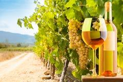 白葡萄酒和葡萄园 免版税库存图片