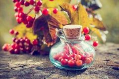 瓶在户外树桩的Guelder玫瑰色莓果 库存照片