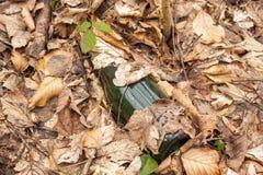 瓶在森林里 库存图片