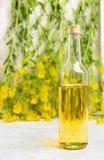 瓶在白色木桌上的菜子油在新强奸开花 免版税库存图片