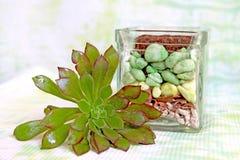 瓶子和多汁植物在种植前 库存照片