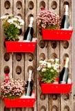 瓶汽酒,每一个在有一个花盆的一个红色金属容器,在一个老木酒机架 库存图片