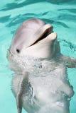 瓶海豚鼻子 库存照片