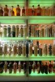 瓶瓶子 免版税库存图片