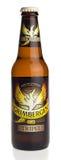瓶赫林贝亨Tripel啤酒 库存照片