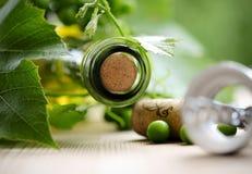 瓶酒和绿色叶子 免版税库存照片