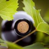 瓶酒和绿色叶子 库存照片