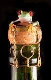 瓶香槟被注视的青蛙红色结构树 库存图片