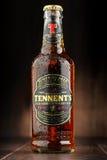 瓶ofTennents威士忌酒橡木啤酒 库存图片