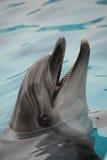 瓶smilling海豚的鼻子 库存照片