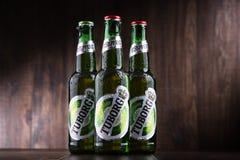 瓶Tuborg啤酒 库存照片