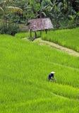 瓷域有i图象juli我的照片投资组合米相似的被采取的工作者yangshou 免版税图库摄影
