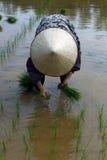 瓷域有i图象juli我的照片投资组合米相似的被采取的工作者yangshou 免版税库存照片