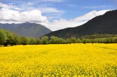 瓷强奸天空西藏 免版税库存照片