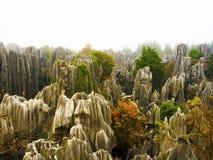 瓷森林石头云南 图库摄影