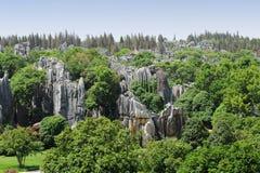瓷森林自然石头奇迹 免版税库存照片
