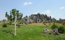 瓷森林自然石头奇迹 免版税图库摄影