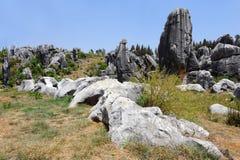 瓷森林自然石头奇迹 库存图片