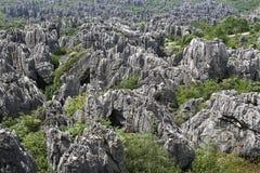 瓷森林自然石头奇迹 库存照片