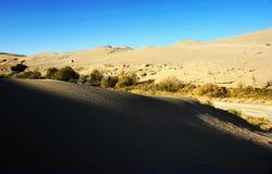 瓷沙丘沙子结构树 库存图片