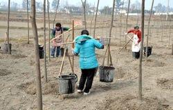 瓷浇灌妇女的pengzhou结构树 免版税库存图片